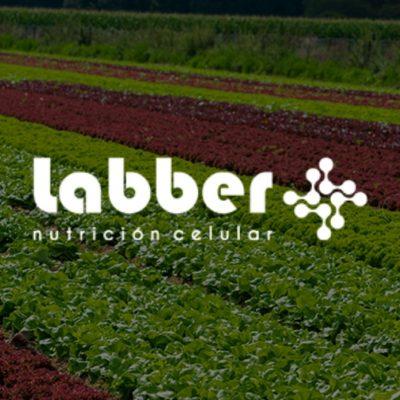 Posicionamiento SEO | Labber
